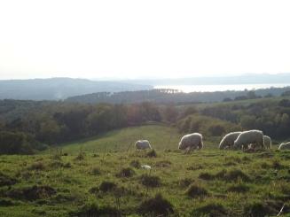 panorama-dallaltopiano-presso-il-lago-di-Martignano-con-il-lago-di-Bracciano-sullo-sfondo